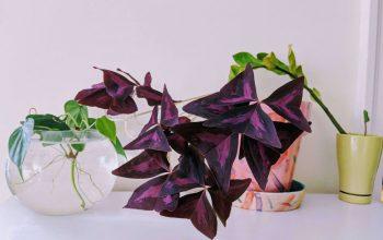 ۱۰ گیاه کوچک و بامزه برای درون خانه