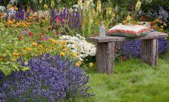 ۱۲ گیاه که پشهها را از خانه شما دور میکنند!