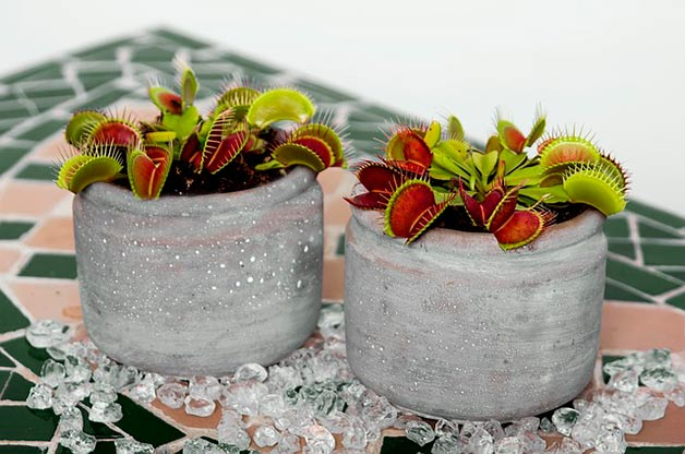 ۲۹ حقیقت عجیب و غریب راجع به گیاهان اطرافمان!