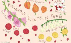 گیاهان سمی اطراف ما