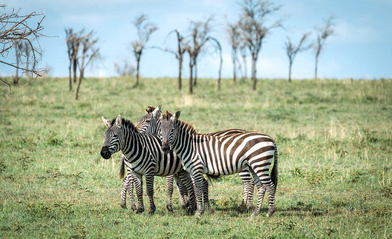 ۱۵ عکس که شما را مجبور میکنند به تانزانیا سفر کنید!
