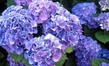 گرانترین گلهای دنیا را بشناسید!