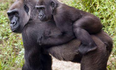 ۱۰ حیوان با طولانیترین دوره بارداری