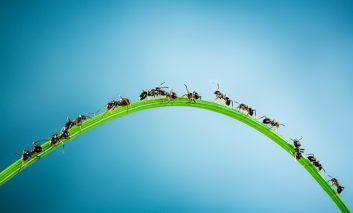 """۱۳ راهکار طبیعی برای از بین بردن یا فراری دادن """"مورچهها"""""""