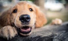 زبان بدن سگتان را بخوانید