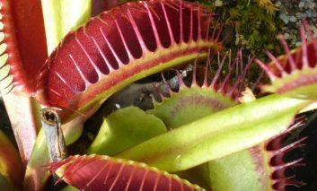 شگفت انگیزترین گیاهان گوشتخوار روی کره زمین!