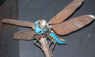 با ۱۰ عدد از بزرگ ترین حشرات روی کره زمین آشنا شوید!