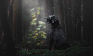 برترین عکسهای گرفته شده از سگ ها در سال ۲۰۱۸