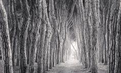 درختان جادویی مایکل کنا!