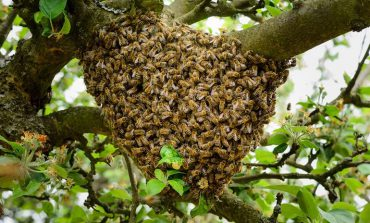 آیا واقعا زنبور عسل را میشناسید؟