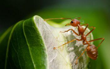 با این ۱۲ حرکت جالب و عجیب مورچهها آشنا شوید! – قسمت دوم