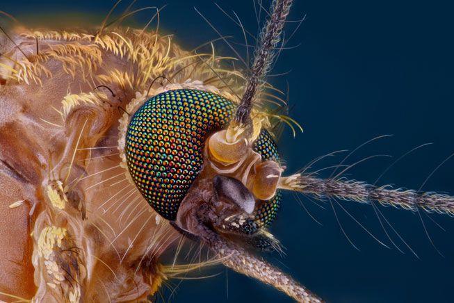۱۰ چیزی که راجع به پشهها نمیدانستید!