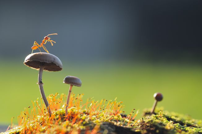 با این ۱۲ حرکت جالب و عجیب مورچهها آشنا شوید! – قسمت اول