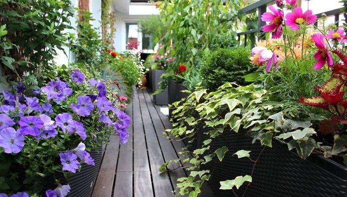 چگونه بالکنمان را تبدیل به باغ کنیم؟
