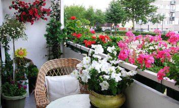 بهترین گلها برای پرورش در بالکن