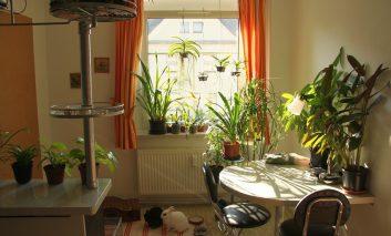 بهترین گیاهان خانگی براساس نور خانه شما