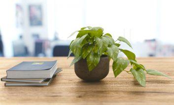 بهترین گیاهان برای کم کردن رطوبت خانه