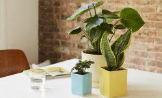 ۵ نکته برای افزایش گردش هوای محیط گیاهان خانگی