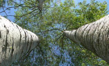 شگفت انگیزترین درختانی که روی کره زمین روییدهاند