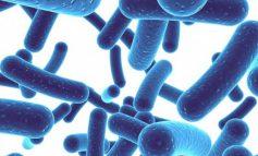 پروبیوتیکها واقعا تا چه اندازه مفیدند؟