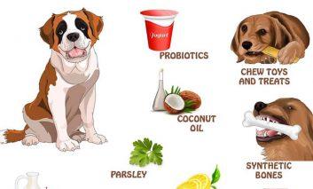 دهان سگتان بوی بدی میدهد؟ راه حلش اینجاست