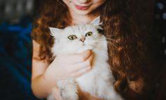 سرپرستی از یک گربه، سلامتی و تندرستی را به ارمغان میآورد