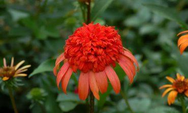۱۴ گیاه با گل خاص برای باغچه و بالکن