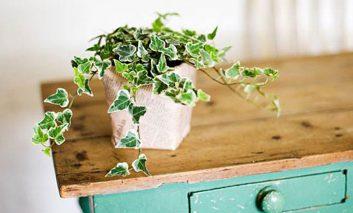 تازه کارها این گیاهها را بکارند