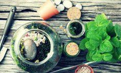 ضروریترین نکاتی که باید برای پرورش گل و گیاه در خانه بدانید