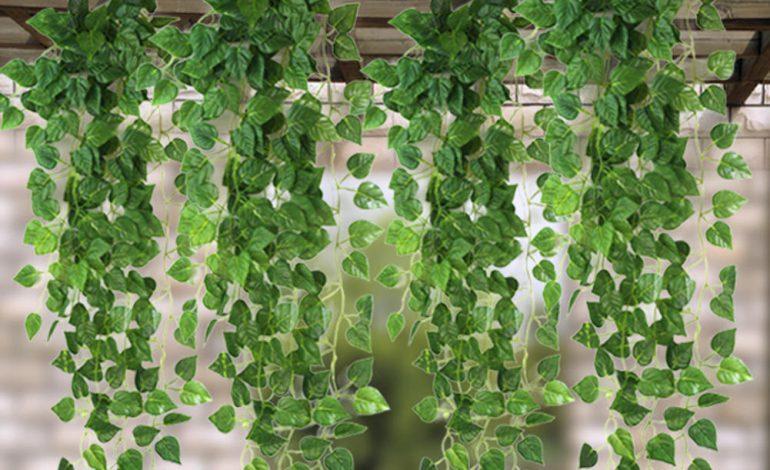 ۱۱ گیاه علفی و رونده که از در و دیوار خانهتان بالا میروند!