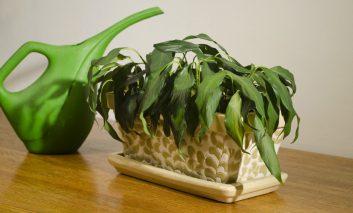 گیاه مورد علاقهتان دارد میمیرد؟ مشکل چیست؟