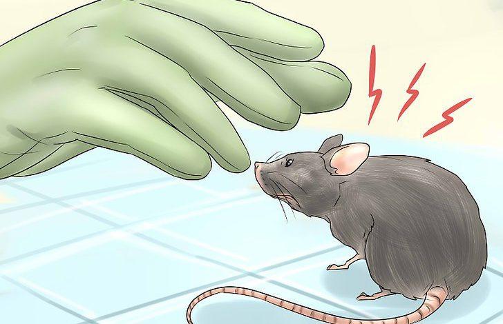 چه طور بدون کشتن موشها از شرشان خلاص شویم؟