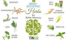 این گیاهان حافظه را به طرز شگفت انگیزی بهبود میبخشند!