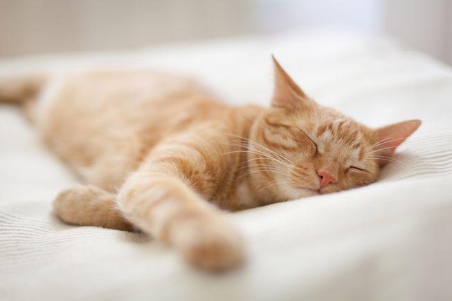 گربهها چه خوابهایی میبینند؟!