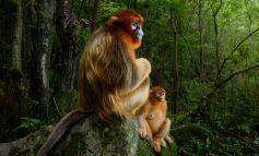 برندگان مسابقه عکاسی از حیات وحش سال ۲۰۱۸