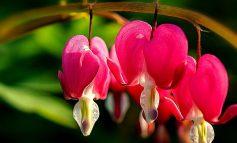 زیباترین گلهای روی زمین