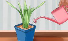 ۴ روش برای آبیاری گیاهان بیرون و درون خانه در طول سفر