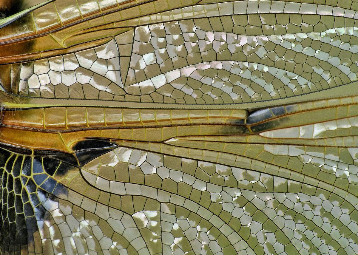 7- میتوانید حدس بزنید این چیست؟ بالهای زیبای یک سنجاقک! مانند شیشه کاری میماند!