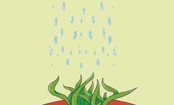 از کجا بفهمیم هر گیاه به چه میزان آب نیاز دارد؟