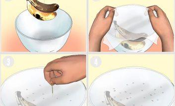 چطور مگسهای میوه را از خانه بیرون کنیم؟