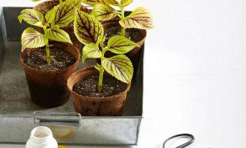 تکثیر گیاهان خانگی از سیر تا پیاز (قلمه گیری و تقسیم بوته)!