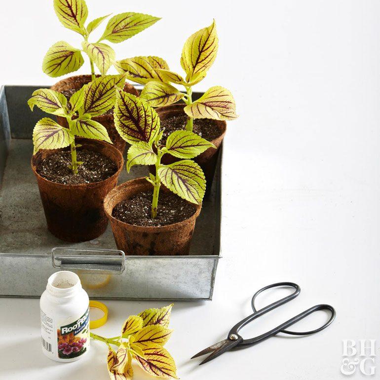 تکثیر گیاهان خانگی از سیر تا پیاز (خواباندن، دانه، جوانه جانبی)!