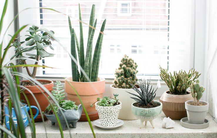 بهترین گیاهان خانگی برای فصل زمستان و زمستان گذرانی