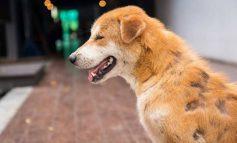 ۱۰ روش برای درمان ریزش موی سگ