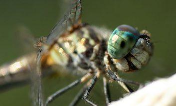 با این حشرات بینهایت بامزه آشنا شوید!