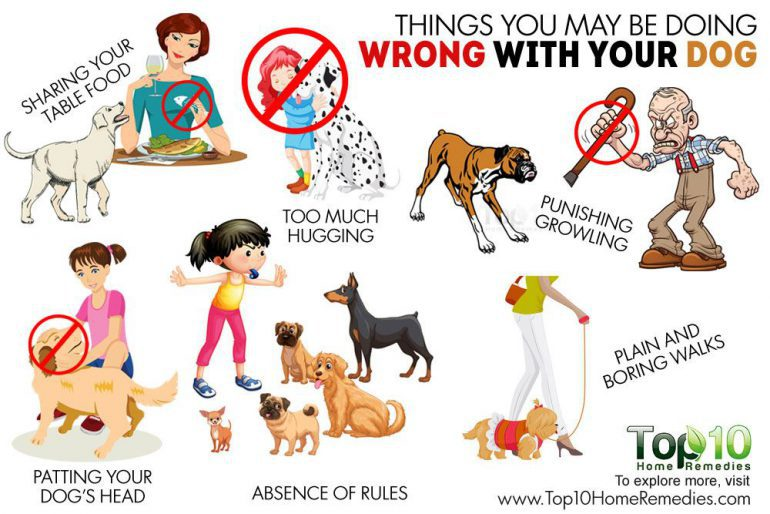 ۱۰ رفتار اشتباهی که با سگتان دارید