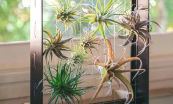 گیاه هوازیتان دارد میمیرد؟ سریع دست به کار شوید