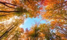 چرا برگهای درختان در پاییز تغییر رنگ میدهند؟