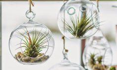 فوت و فن آبیاری گیاهان هوازی