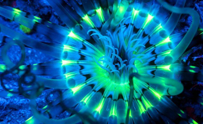 موجودات نئونی اعماق دریا